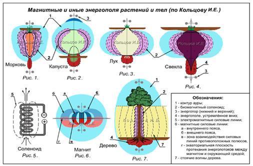 http://gorod-magov.ucoz.org/_fr/5/6287052.jpg